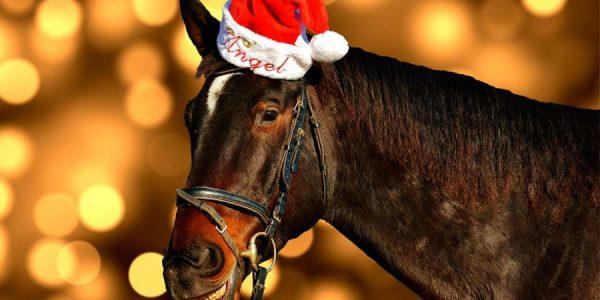 WBO-Tag mit weihnachtlichem Flair